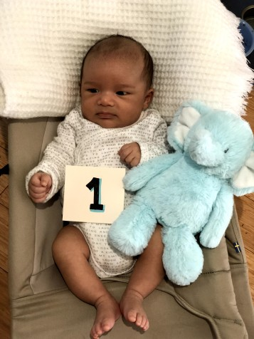 DASH AT ONE MONTH OLD – ALIEN TO AMERICAN